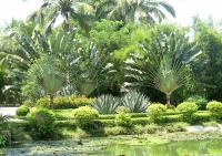 Le jardin tropical de Xinglong